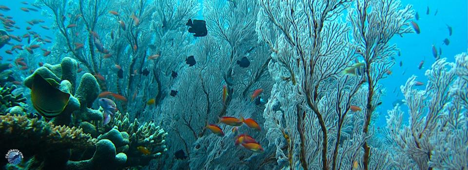 bali-amed-diving-plongee-jemeluk-01