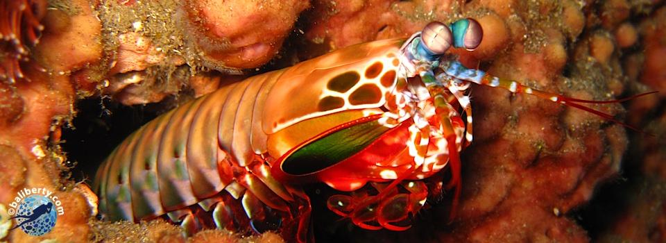 bali-amed-diving-plongee-jemeluk-02