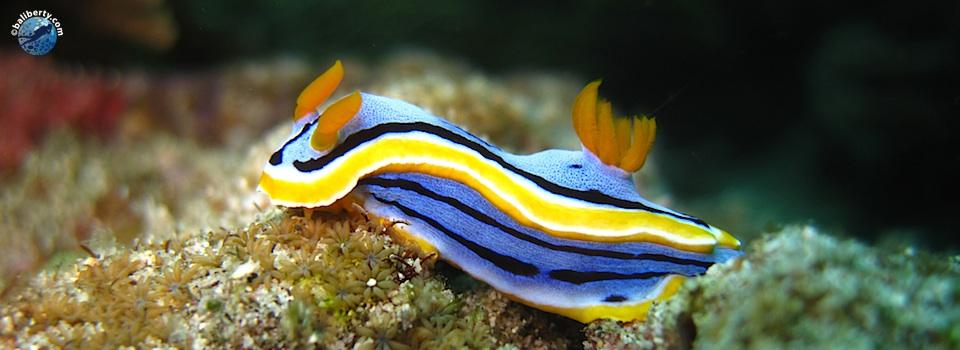 bali-amed-diving-plongee-jemeluk-06