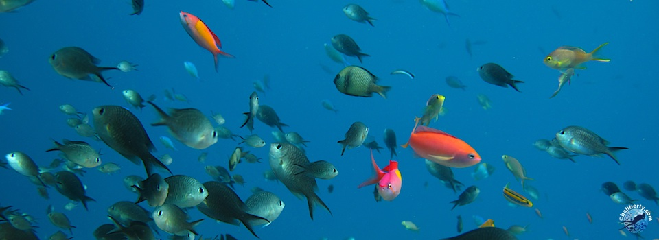 bali-amed-diving-plongee-jemeluk-09