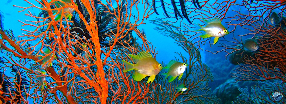 bali-amed-diving-plongee-jemeluk-13