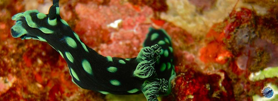 bali-amed-diving-plongee-lipahbay-01