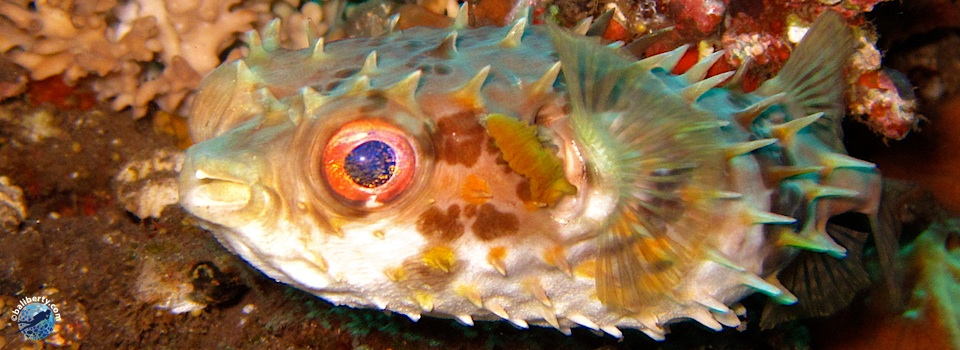 bali-amed-diving-plongee-lipah