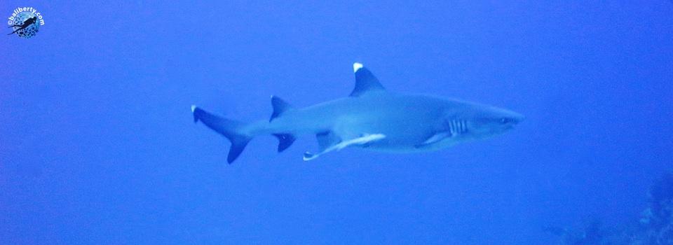 bali-tulamben-diving-plongee-batu-kelebit-02