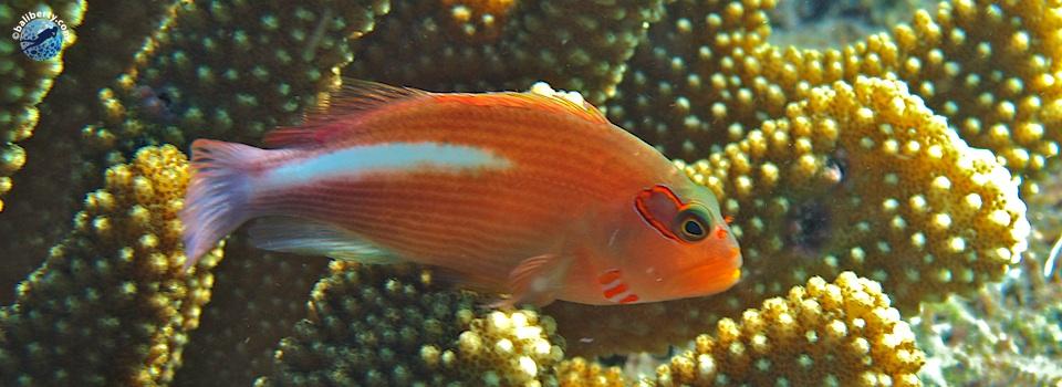 bali-tulamben-diving-plongee-batu-kelebit-03