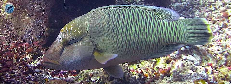 bali-amed-diving-plongee-lipah-12