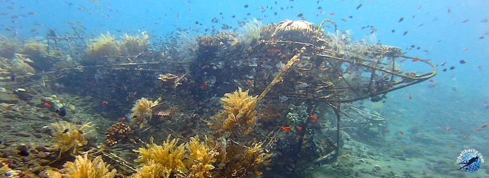 bali-tulamben-diving-plongee-jardin-corail-reef-04
