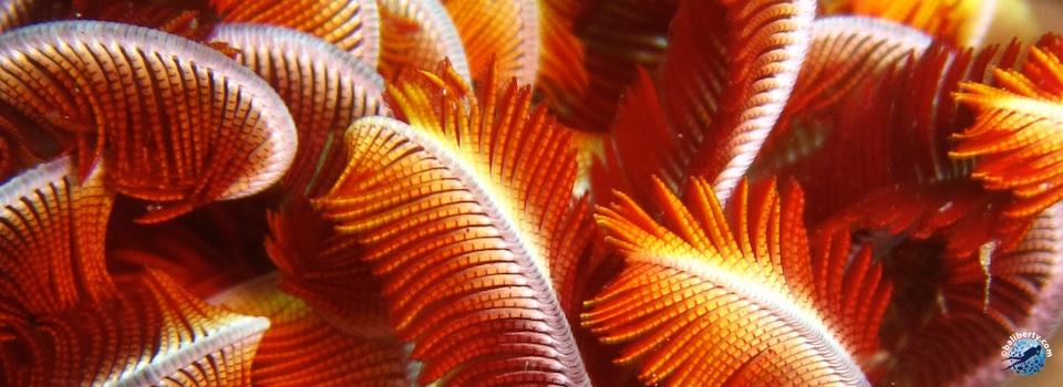 bali-tulamben-diving-plongee-jardin-corail-reef-05