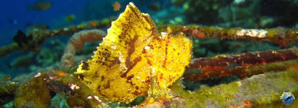 bali-tulamben-diving-plongee-jardin-corail-reef-18