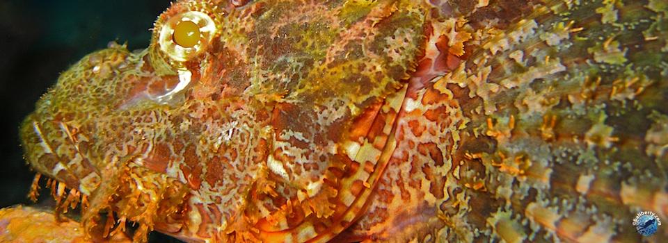 bali-amed-diving-plongee-macro-muck