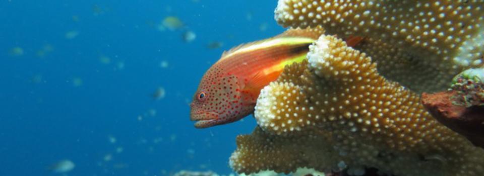 bali_plongee_diving_kubu