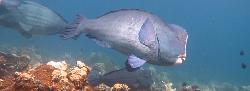 bali_plongee_diving_kubu_2