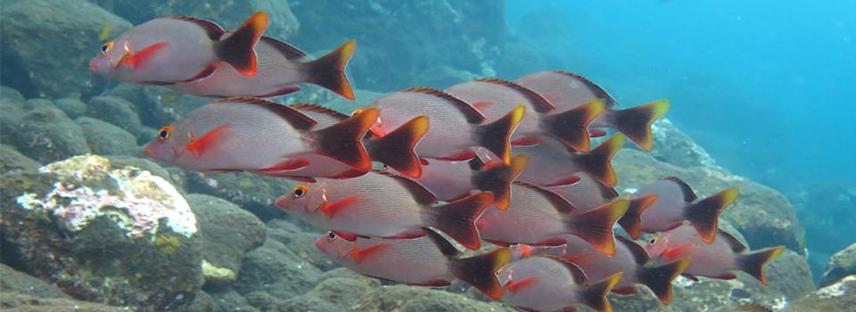 bali_plongee_diving_kubu_5