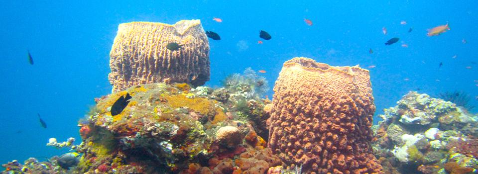 bali_plongee_diving_kubu_6